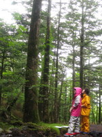 森の中で一休み